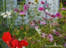 300-colorful-beautiful-garden-09172019_215