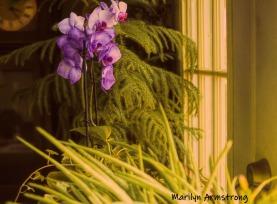 300-impression-purple-orchids-09152019_006