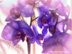 300-impression-purple-orchids-09152019_010