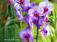 Purple and very orchid