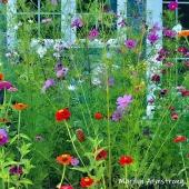 300-square-beautiful-garden-09172019_205