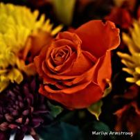 300-square-rose-anniversary-09172019_104