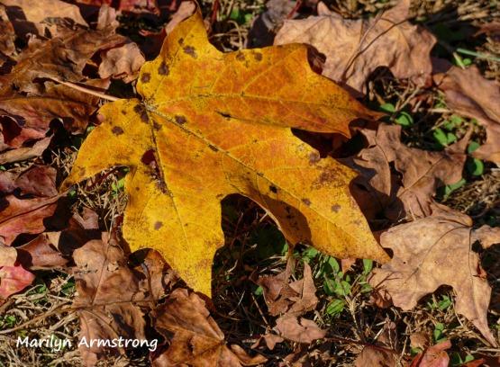 180-2-Leaves-River-Bend-Autumn-Mar-20191021_036
