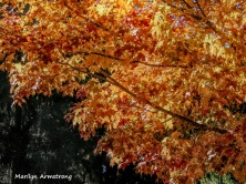 180-2=Brightest Tree-River-Bend-Autumn-Mar-20191021_028