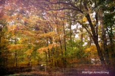 180-Front-Yard-Home-Autumn-Mar-20191016_128