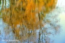180-Maple-Reflection-River-Bend-Autumn-Mar-20191021_105
