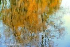 180-Maple-Reflection-River-Bend-Autumn-Mar-20191021_105