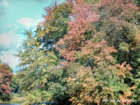 180-Muted-Fall-Trees_10-4-10042019_001