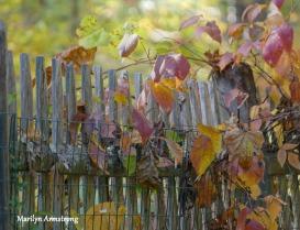 180-Red=Vines-Autumn-Aldrich-St-MAR-10142019_003