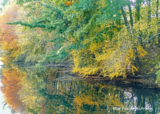 180-Reflection-Canal-Autumn-Leaves-MAR-10132019_098