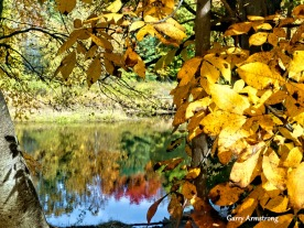 180-River-Autumn-Leaves-GAR-10132019_178