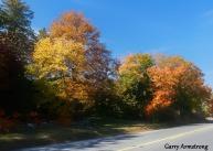 180-Road-Home-Autumn-Leaves-GAR-10132019_235