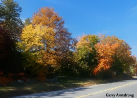 180-Road-Home-Autumn-Leaves-GAR-10132019_235