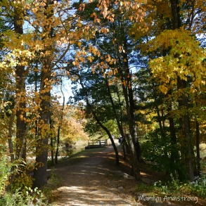 180-Square-Femce-Path-Autumn-Leaves-MAR-10132019_029