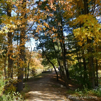 180-Square-Femce-Path-Autumn-Leaves-MAR-10132019_029