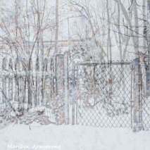 Woods and fence