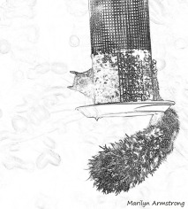 300-bw-sketch-squirrel-10152019_008