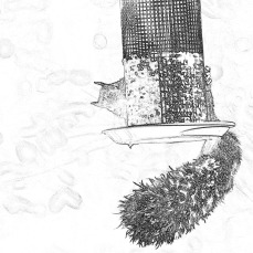 300-bw-sketch-squirrel-10152019_008