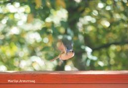 300-fly-to-aiutumn-birds_10-5_10052019_031-1.