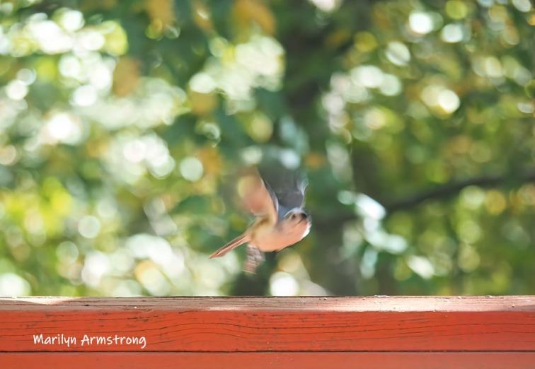 300-fly-to-aiutumn-birds_10-5_10052019_031-2