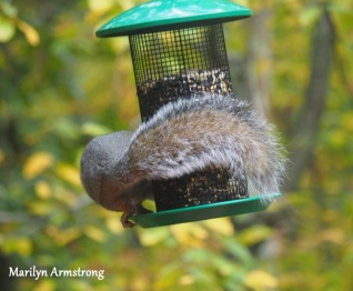 300-hungry-squirrel_10-12_10122019_004