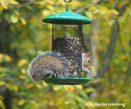 300-hungry-squirrel_10-12_10122019_006