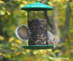 300-hungry-squirrel_10-12_10122019_010.