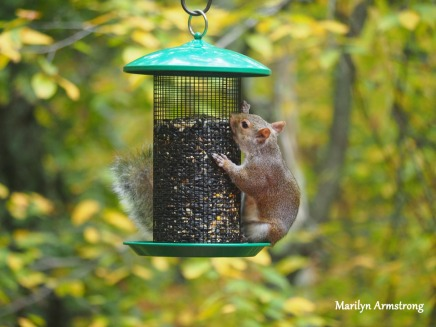 300-hungry-squirrel_10-12_10122019_008