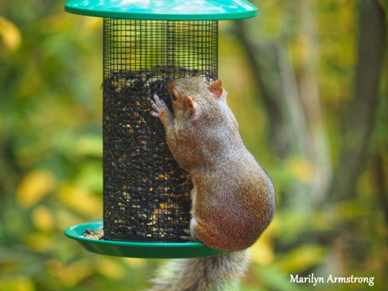 300-hungry-squirrel_10-12_10122019_015