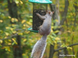 300-hungry-squirrel_10-12_10122019_016