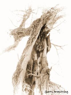 300-BW-old-tree-farm-ga-09262019_121