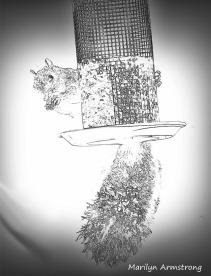 300-sketch-1-squirrel-10152019_010