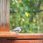 300-square-gray-bird_10-4-10042019_106