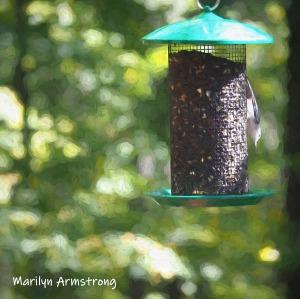 300-square-impression-birds-10-1-10012019_002