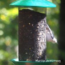 300-square-woodpecker-birds-10-1-10012019_003