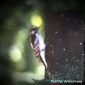 300-square-woodpecker-impression-birds-10-1-10012019_004