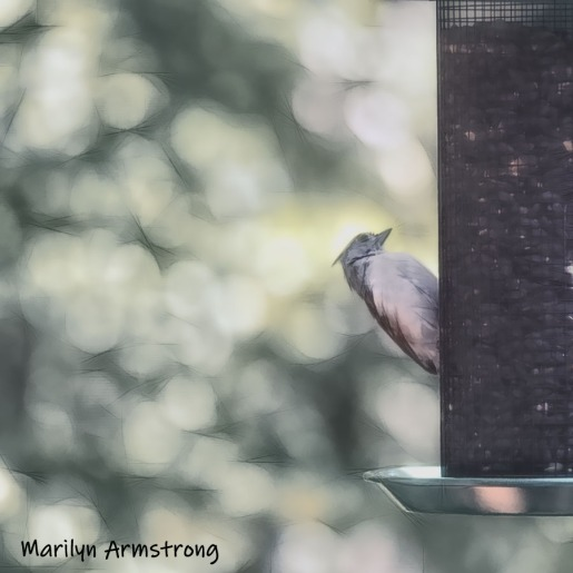 300-tufted-titmouse-birds-10-1-10012019_009