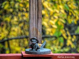300-winter-toad-foliage-20191016_221