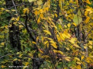 300-yellow-foliage-20191016_210