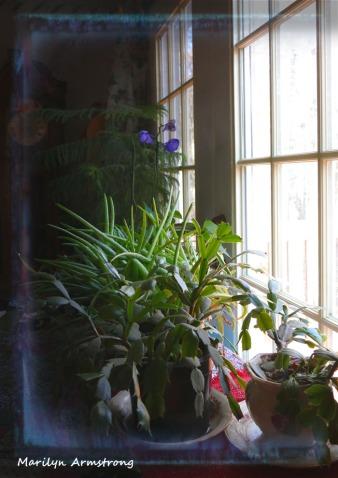 180-Vertical-Indoor garden-20191101_012