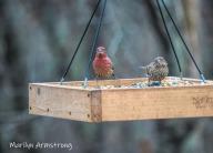 300-birds-11-18-20191118_327