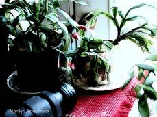 300-camera-cactus-11-17-20191117_108