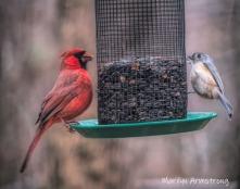 300-cardinal-titmouse-snow-birds-11-12-20191112_121