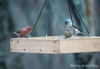 300-dinner-for-birds-11-18-20191118_347