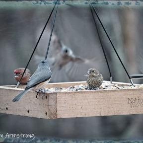 300-dinner-for-the-birds-11-18-20191118_339
