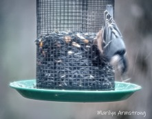 300-first-snow-birds-11-12-20191112_106