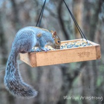 300-hungry-squirrel-11-18-20191118_307