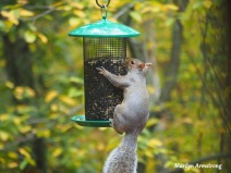 300-hungry-squirrel_10-12_10122019_019