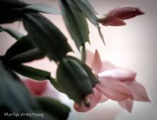 Macro Pink