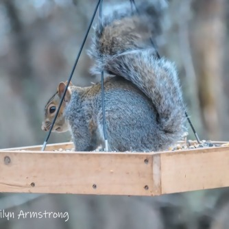 300-pause-in-dining-squirrel-11-18-20191118_308